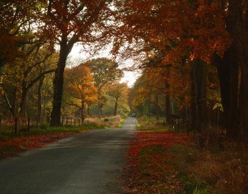 autumn-leaves-charlbury-500